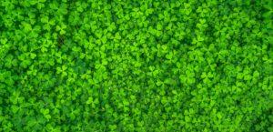 Ako to bude so zeleňou v rámci projektu RosenHAUS?